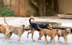 Perros ferales: consecuencia del abandono y la irresponsabilidad humana