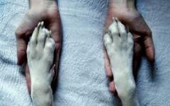 Rescatando un animal enfermo o herido