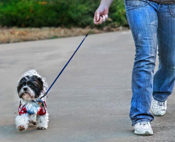 10 Tips para sacar a pasear a tu perro