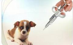Las vacunas son parte de la tenencia responsable de nuestros perros