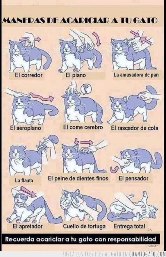 maneras_de_acariciar_a_tu_gato