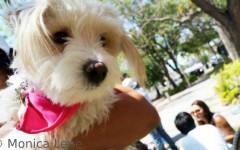 Cómo evitar el celo en nuestras perras y gatas