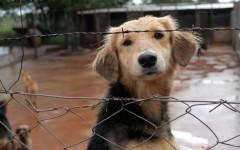 Si piensas que recoger a un animal de la calle y llevarlo a una asociación protectora es la solución, no conoces el problema.