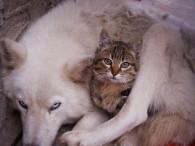 Algunas ventajas de esterilizar a tu mascota  II