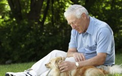 Nos cambian la vida las mascotas