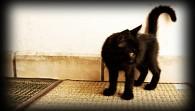 El gato negro, mitos y realidades
