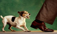Cómo tener un mal perro