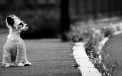 Nunca dejes salir solo a tu perro