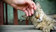 Acaricia a tu gato