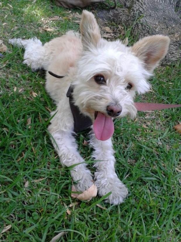 ¿Reproducir a nuestra mascota? : Cuestiones de responsabilidad social y moral