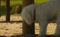 ¿Por qué mi perro marca todo con la orina?