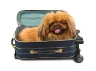 Viajando con nuestra mascota en vacaciones