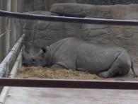 ¿Son felices los animales del zoológico?