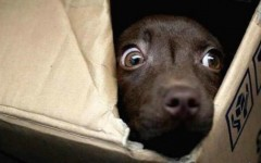 Los ruidos de cohetes siembran el temor y la preocupación entre nuestros perros