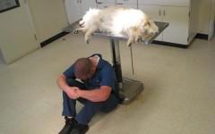 Sobre la cremación de mascotas