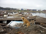 Medidas preventivas en caso de desastres naturales para los animales de compañia