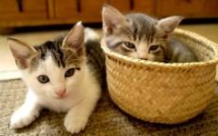 Qué necesito saber para recibir un gato en casa