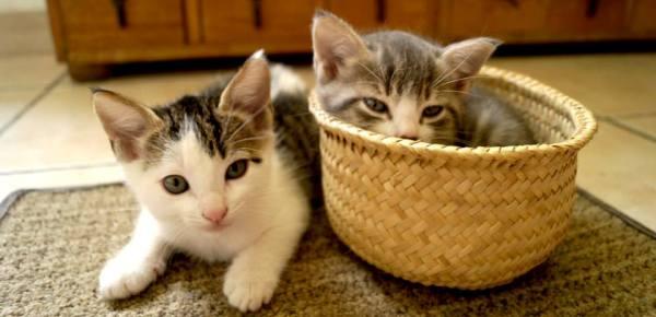 Resultado de imagen para gato en casa