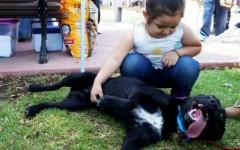 Qué necesito para recibir un perro en casa