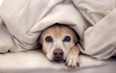 Mi perro duerme en mi cama… y otras confesiones de una entrenadora de perros
