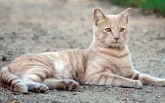 ¿Qué es un gato feral?