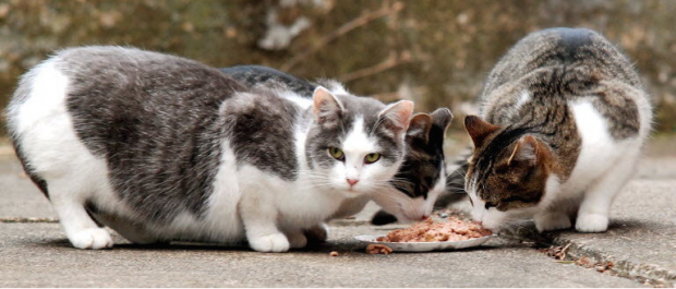 Comederos para gatos comunitarios