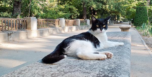 Soluciones para ahuyentar gatos for Ahuyentar gatos jardin