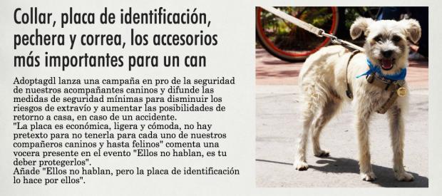 Correa, arnés o collar: La seguridad de tu perro al pasear