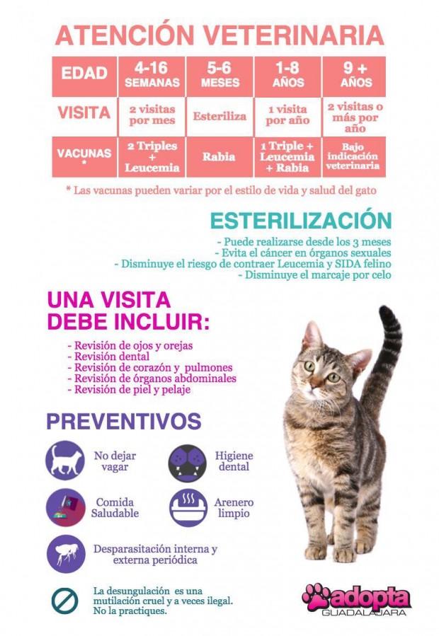 Infografía Atención Veterinaria en Gatos