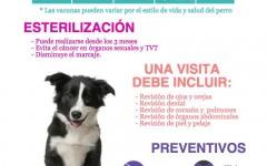 Infografía Atención Veterinaria en Perros